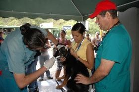 Mascotas recibieron atención médica