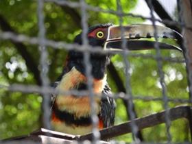 El parque Arístides Rojas ha instalado comedores naturales con el fin de mantener a las distintas aves que allí habitan dentro de los jardines pero sin enjaularlos